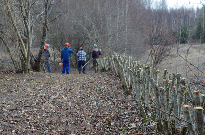 hawthorn fence