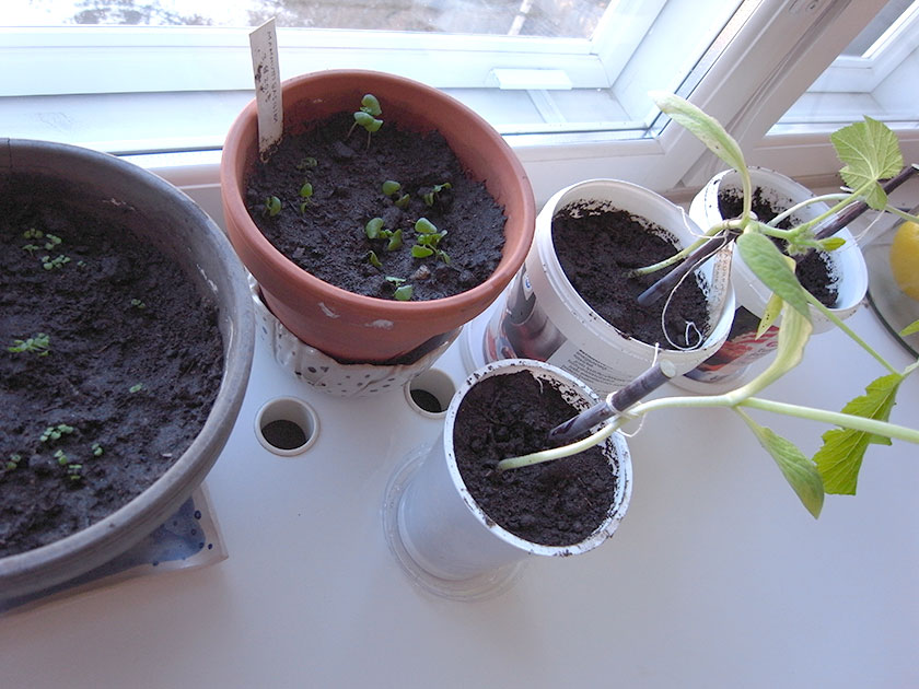 seedlings_potted