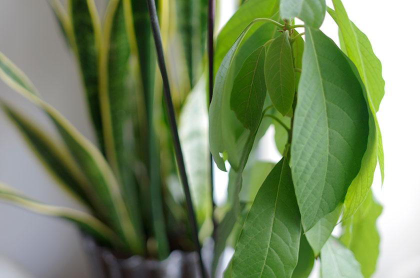 green_interior2