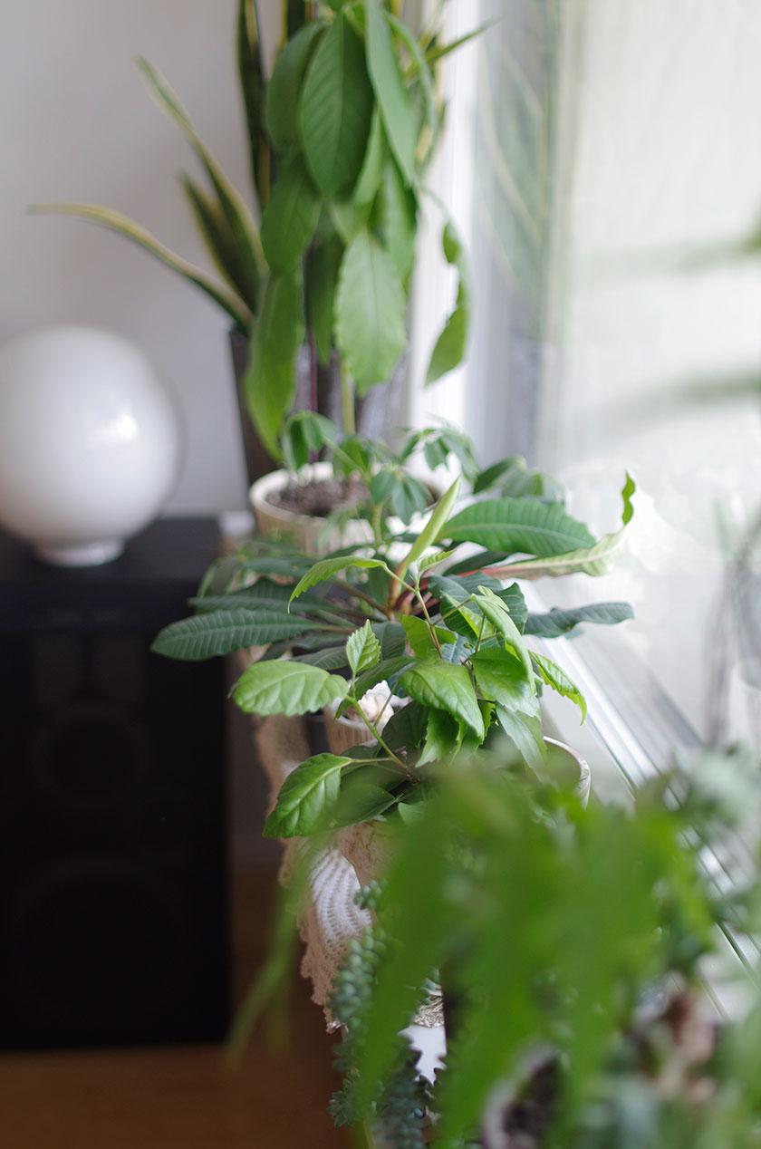 green_interior3