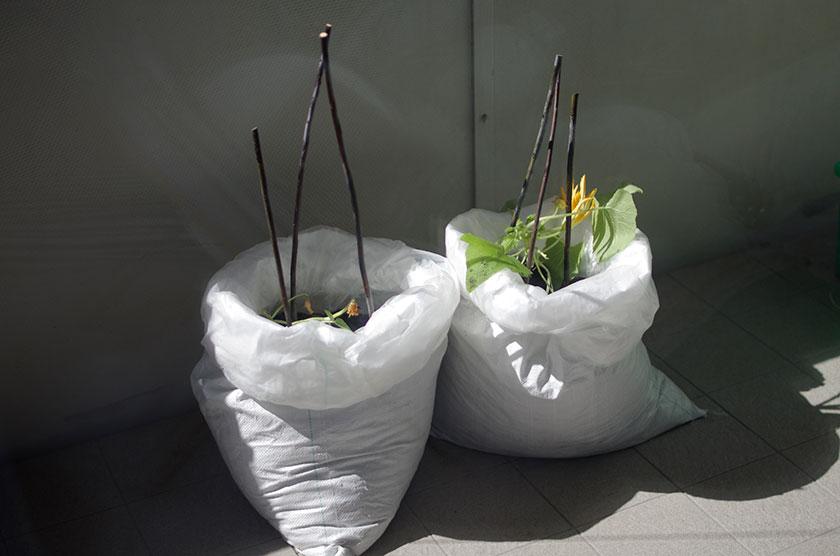 zucchini_bags