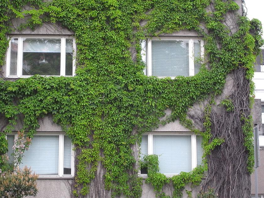 green_wall2