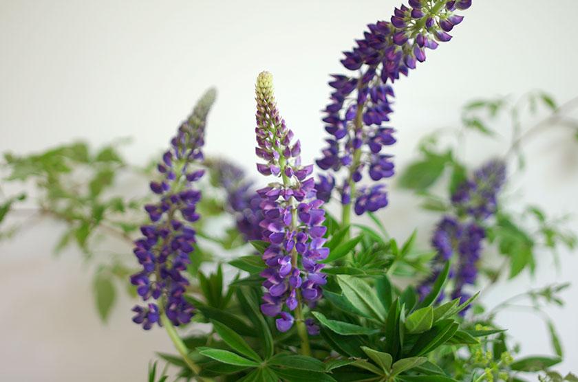summer_flowers_2