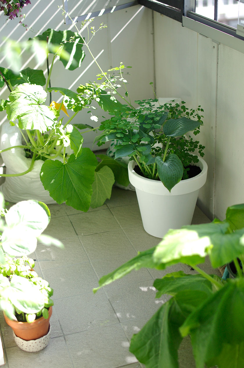 shadow_plants