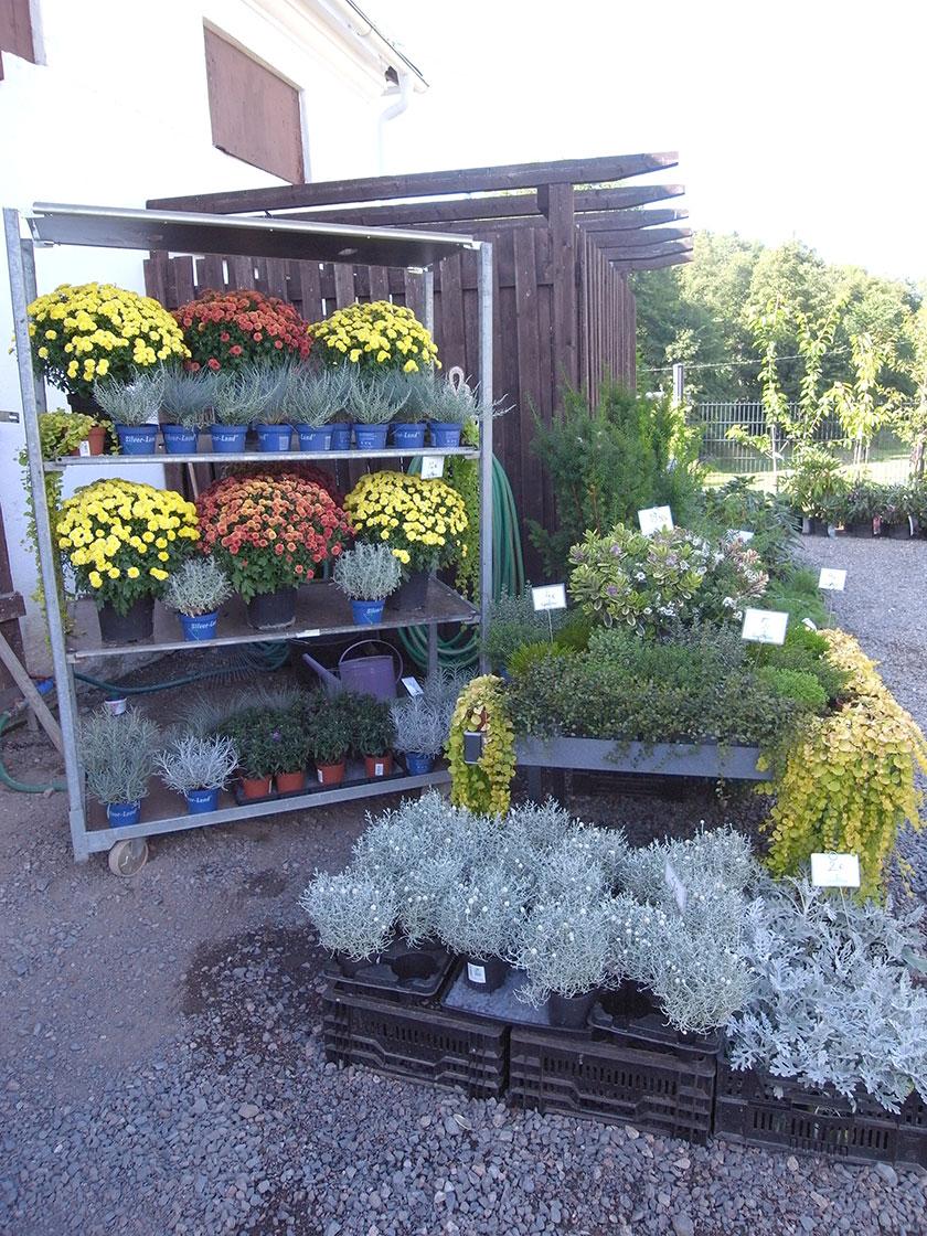 garden_shop_autumn