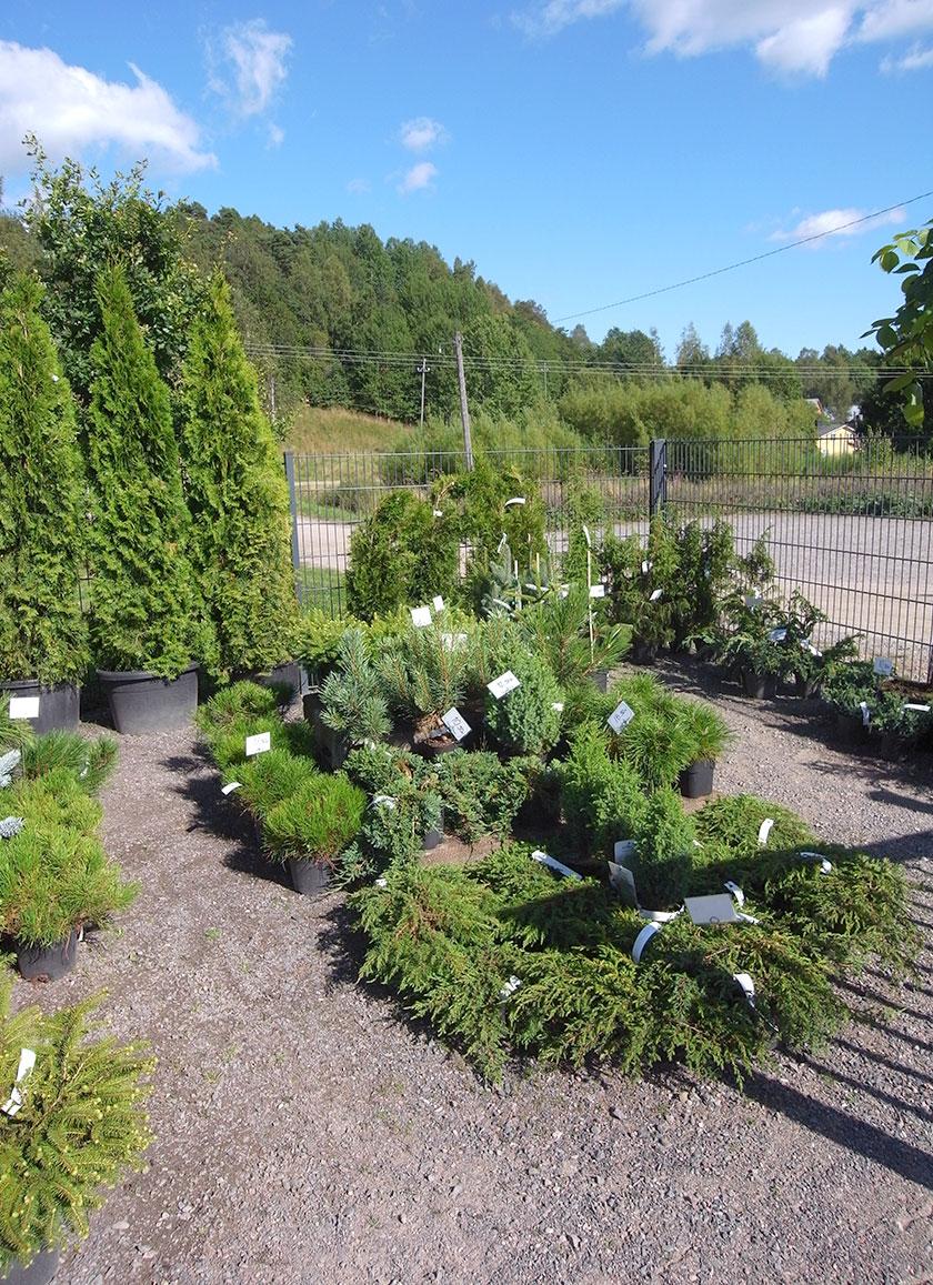 garden_shop_havut