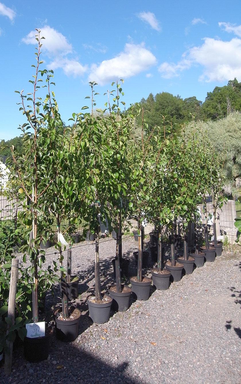 garden_shop_trees