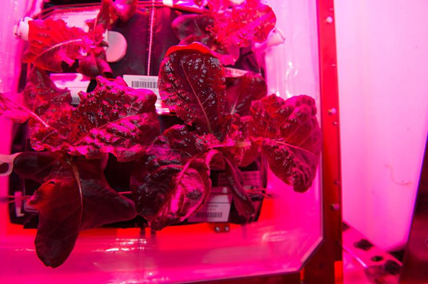 NASA lettuce