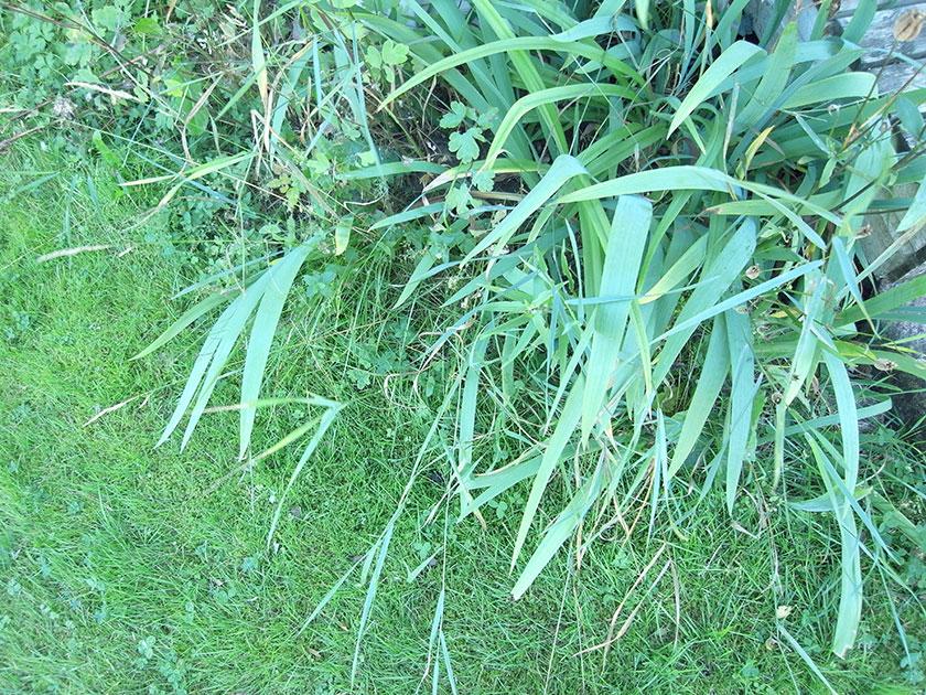 green_plants2