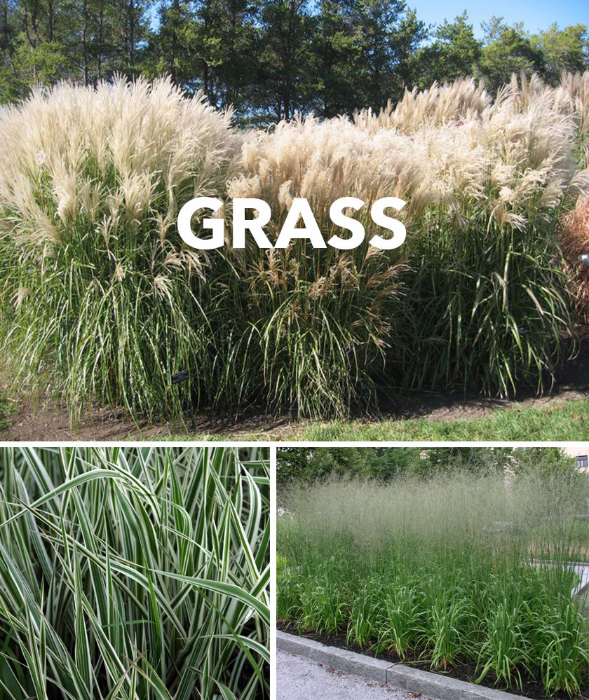 grass_collage