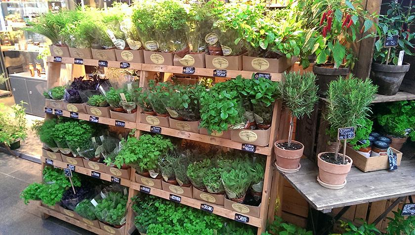 herb_shop2