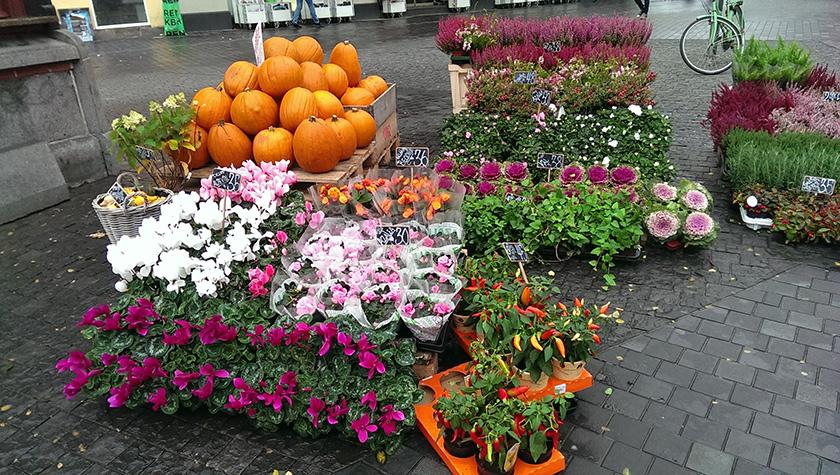 Copenhagen halloween flowers