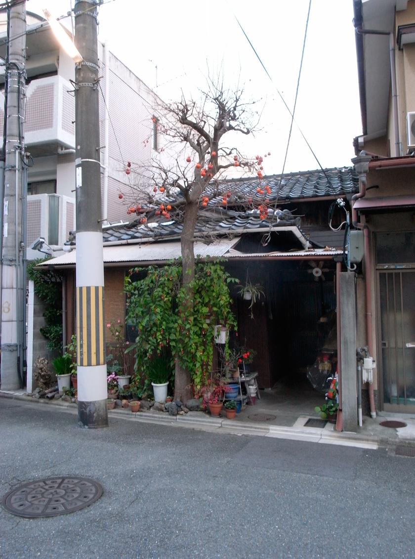 street_garden10