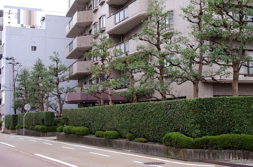 street_garden6