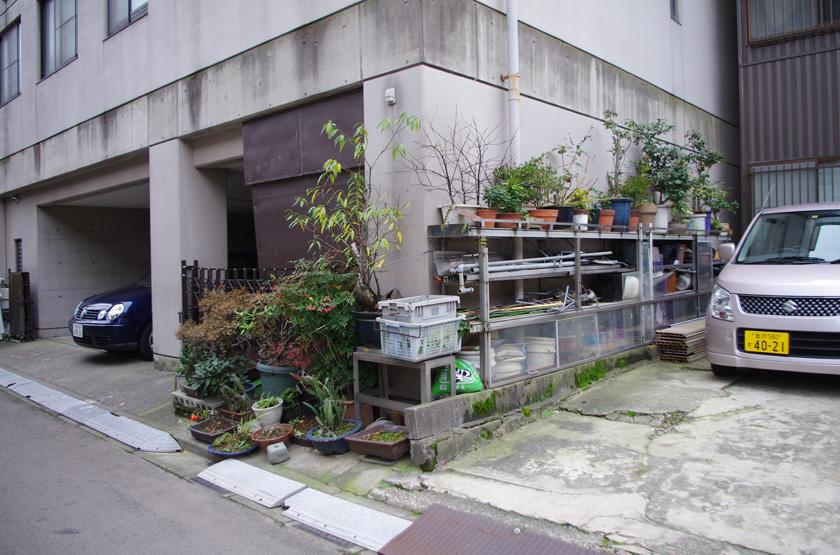 street_garden8