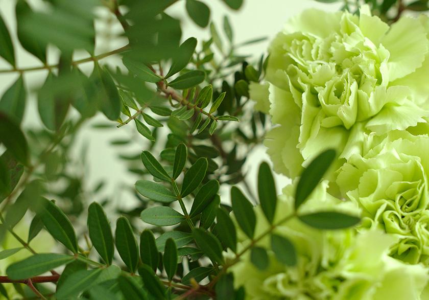 carnation_pistacio