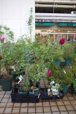 nurseries1
