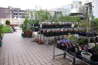 nurseries2