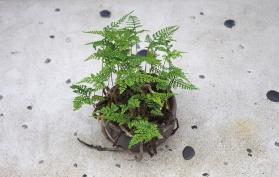 plantshop2
