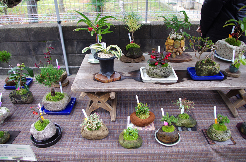 plantstall3
