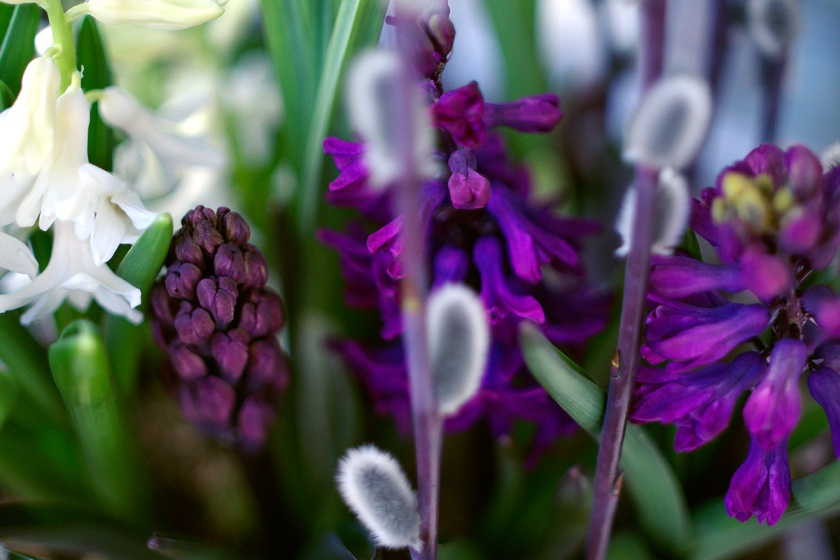 hyacinths2