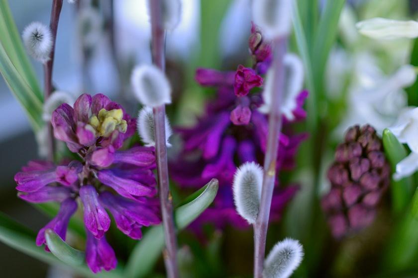 hyacinths4