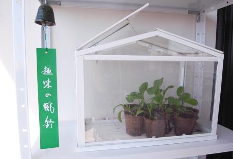 Komatsuna growing next to Japanese temple bell