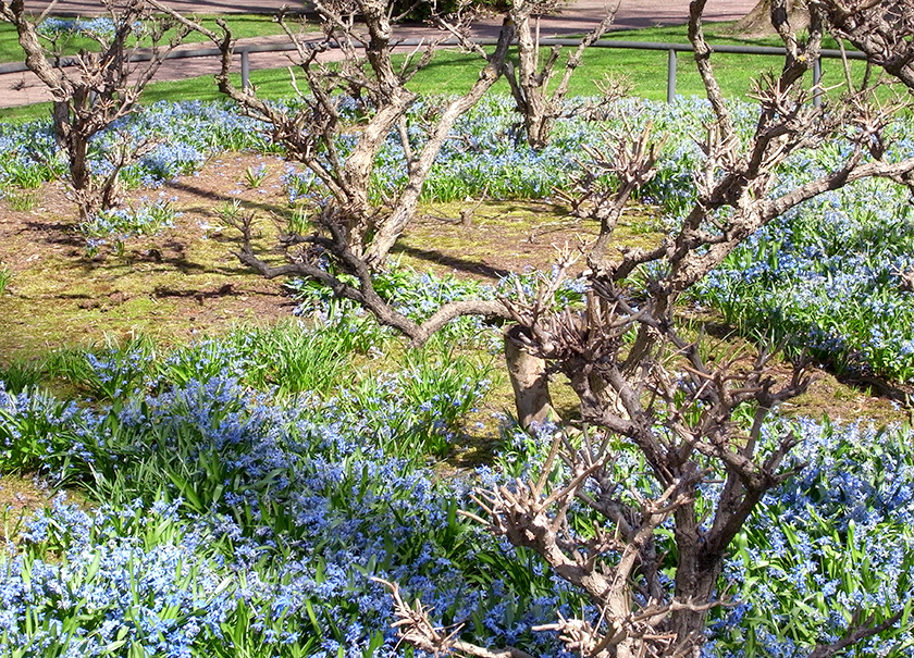 spring_blue