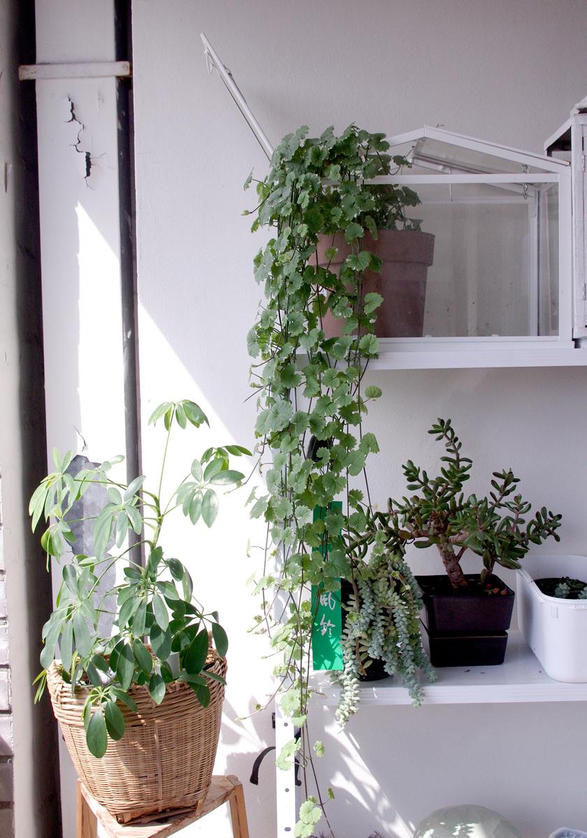 plants2