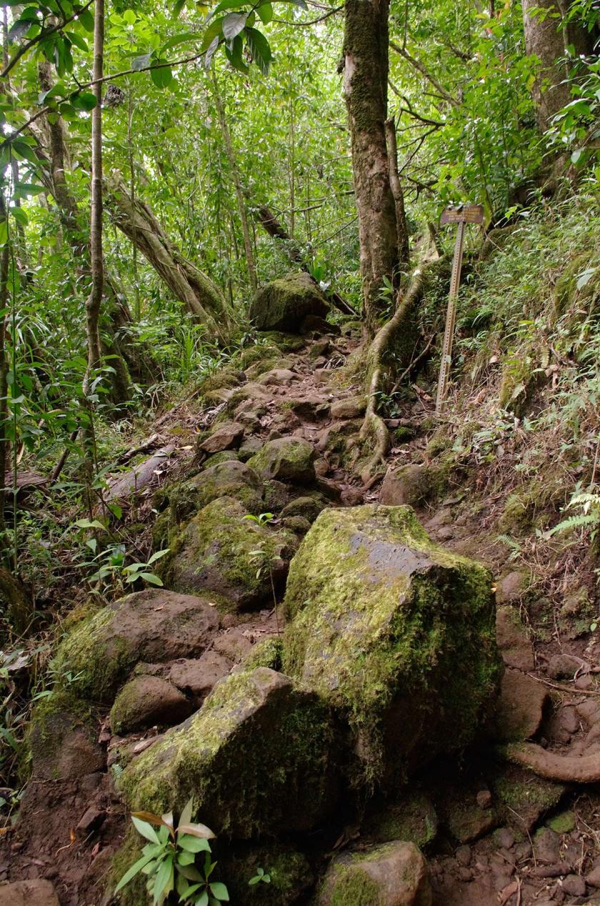 aihualama_trail_beginning