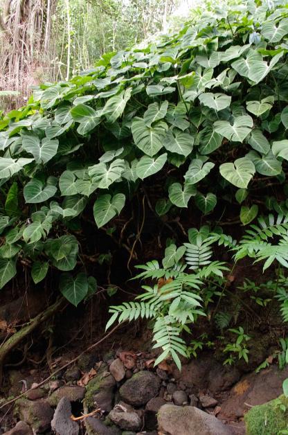 green_plants