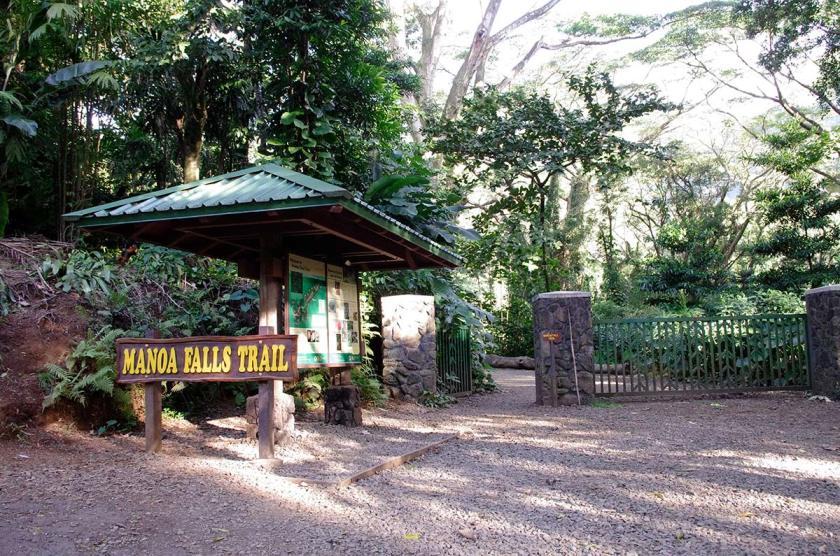 manoa_falls_trail