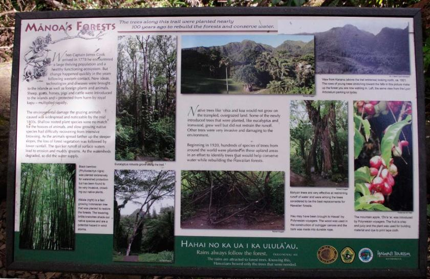 manoa_forest_board