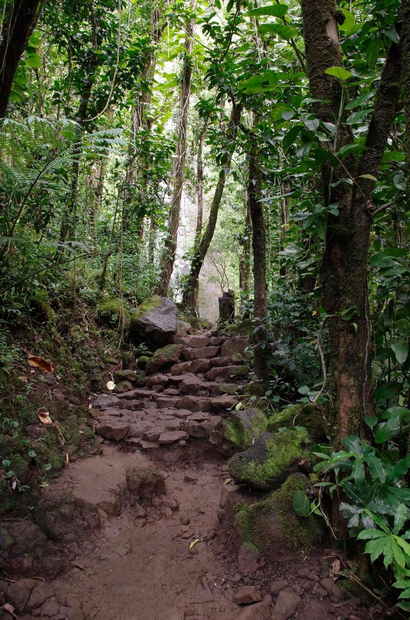 manoa_trail