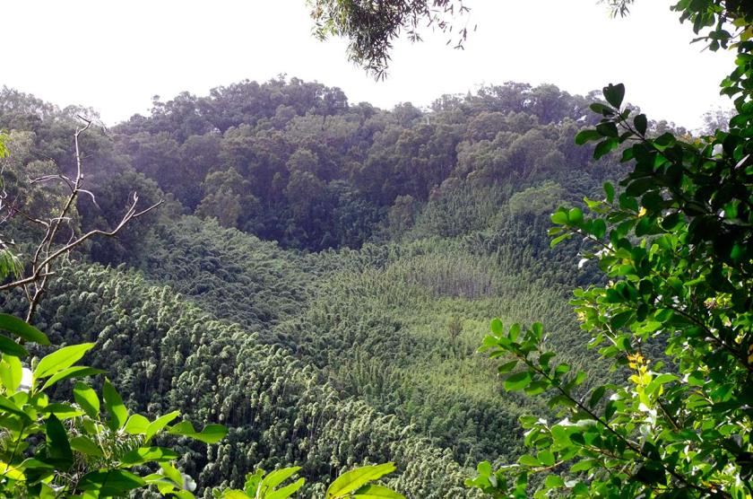 bamboo_above