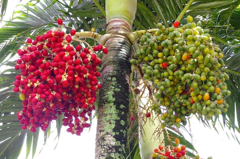 plants_berries