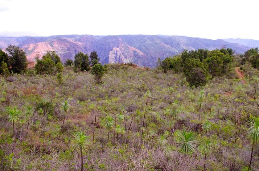valley_plants