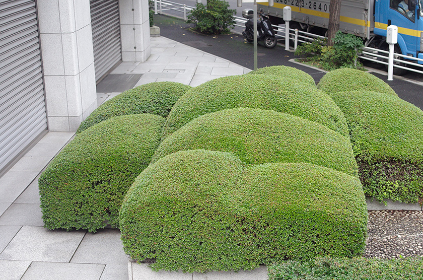 trimmed_bushes