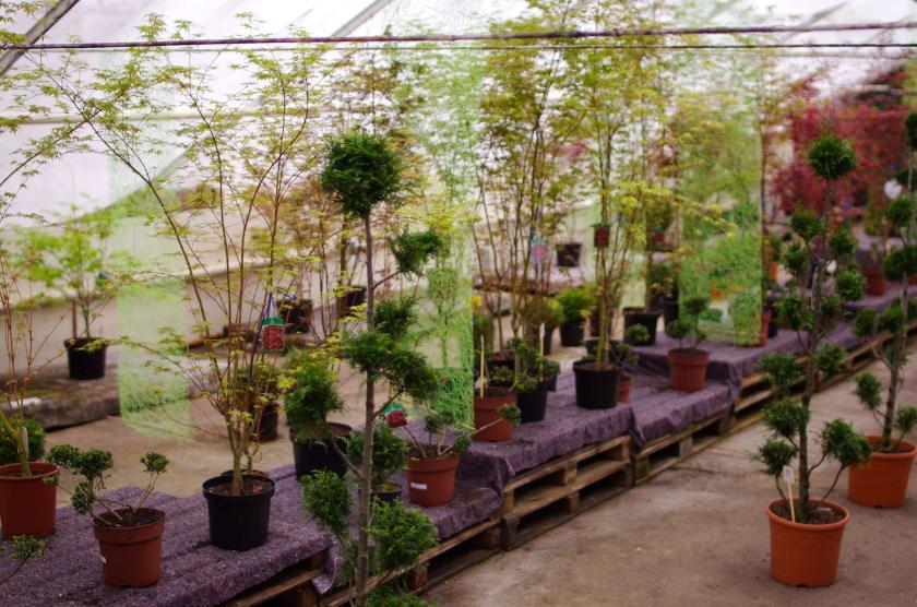 plant_pots