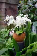 orchid_pot